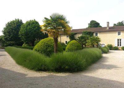 Cour palmiers