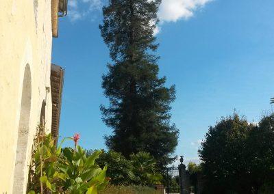 Sequoia-Cour